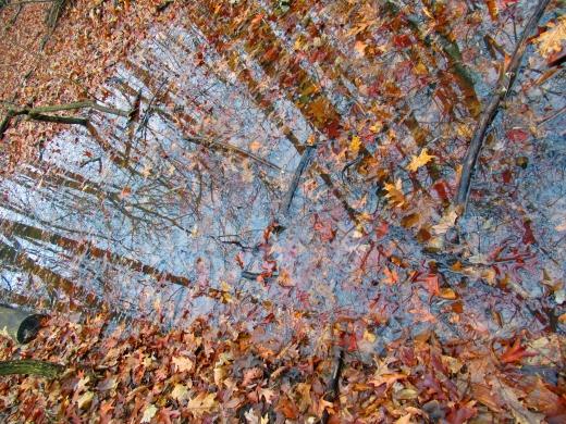 woodedreflection.jpg